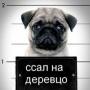 pavel_vladimirovich