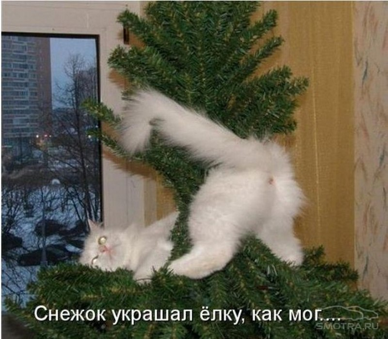 http://i2.smotra.ru/data/img/galleries/90621/157183/sm_img-1287381.jpg